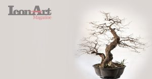Bonsai - Domenico Sorrentino